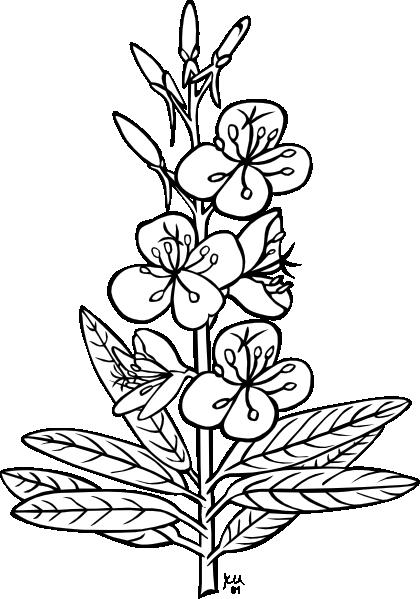 420x599 Plant Outline Clip Art