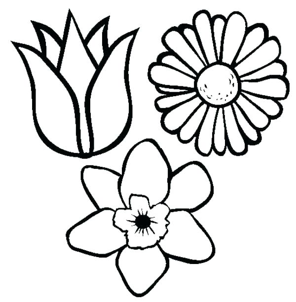 600x612 Spring Flowers Drawing