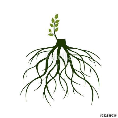 500x500 tree roots and germinate limb roots of plants vector