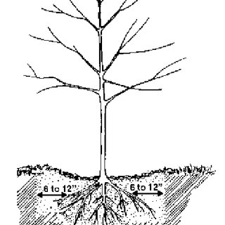 320x320 tree size dictates the required number of stakes download