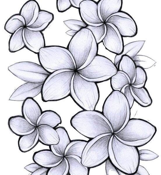 3532d2ae58b85 Collection of Plumeria clipart | Free download best Plumeria clipart ...