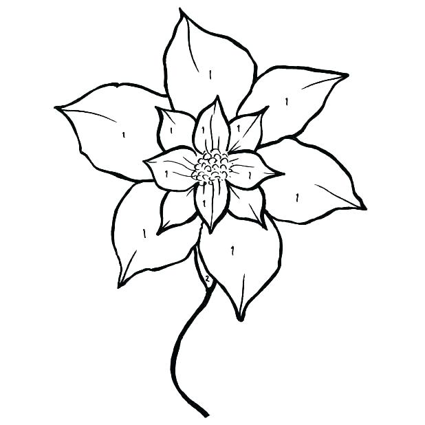 618x618 poinsettia coloring pages poinsettia coloring poinsettia coloring