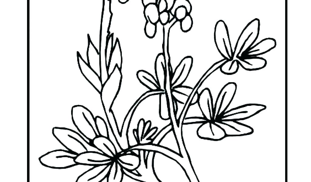 1024x600 poinsettia coloring pages poinsettia coloring