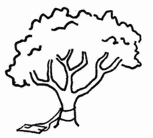 606x545 draw an oak tree the gallery for gt old oak tree drawing