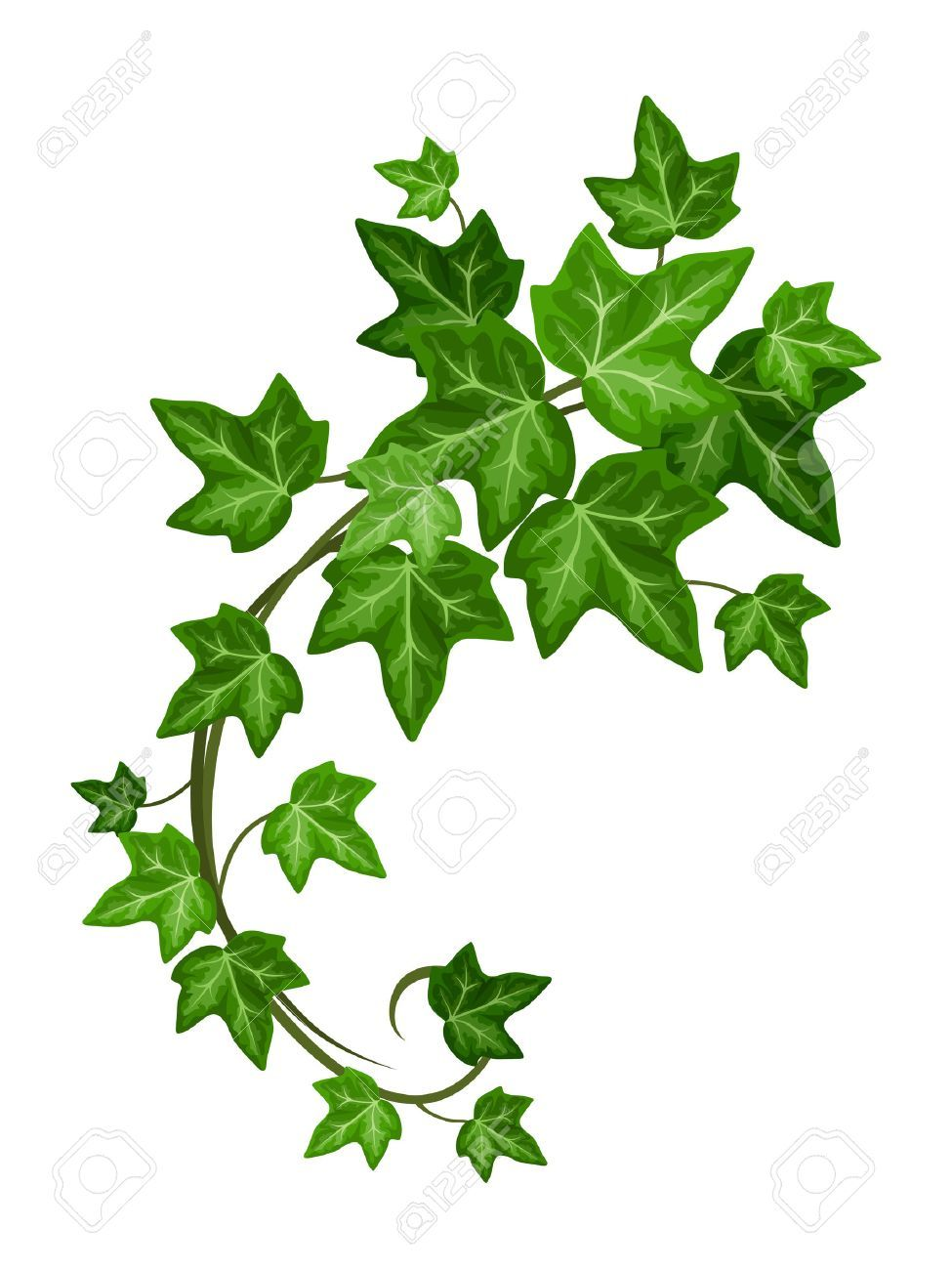 975x1300 image result for ivy plant illustration birthday in ivy