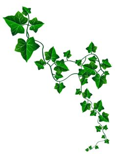 235x316 ivy poison ivy plant drawing plant clip art clipart collection