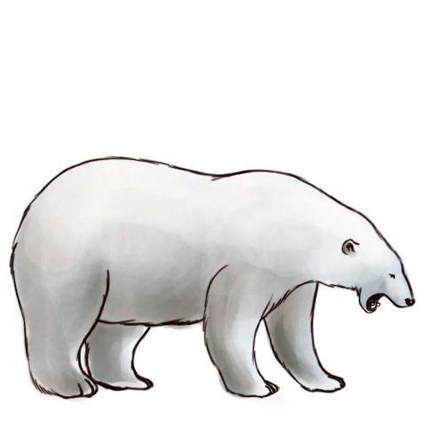 500x500 draw a polar bear stuff polar bear drawing, bear drawing