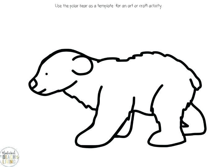 700x541 printable polar bear cute drawings of polar bears template polar
