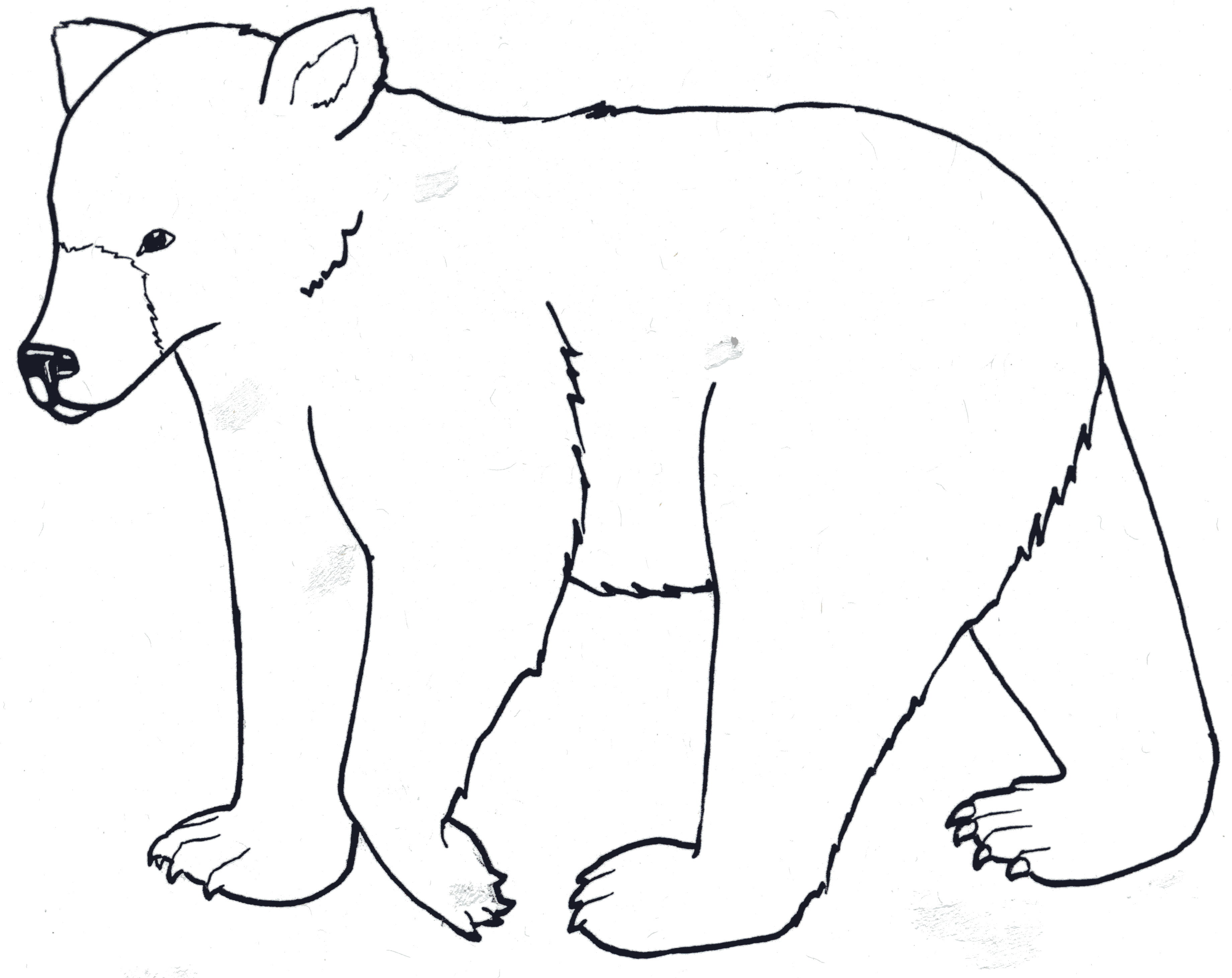 Polar Bear Drawing Step By Step Free Download Best Polar
