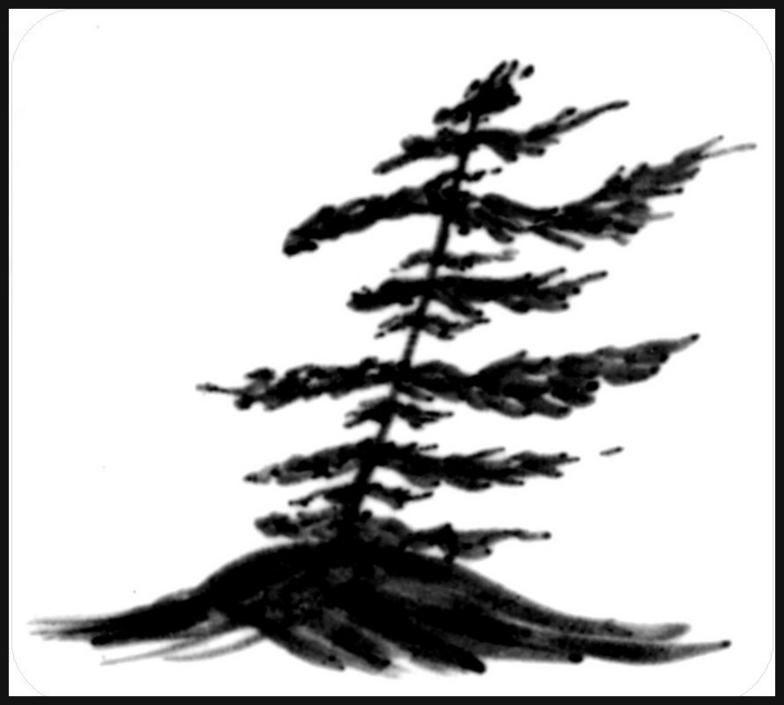 784x705 muskoka tree muskoka pine tree tattoo, pine tattoo, pine tree