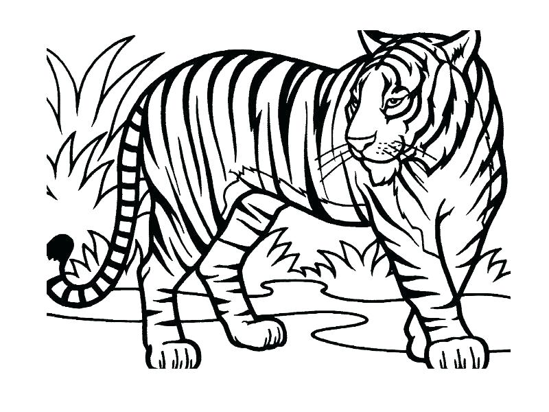 800x600 Power Rangers Jungle Fury Printable Coloring Pages Download