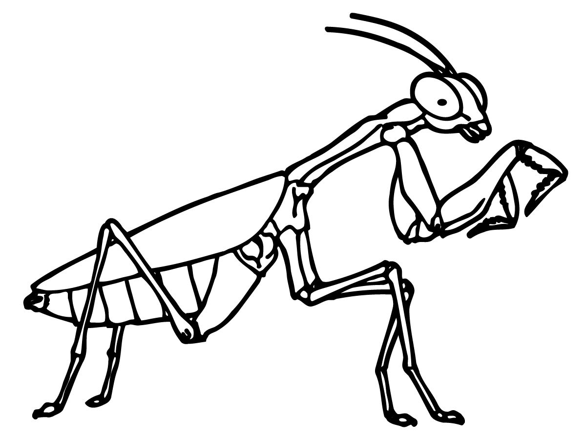 1200x900 Insect Coloring Pages Coloriages Praying Mantis Coloring Pages