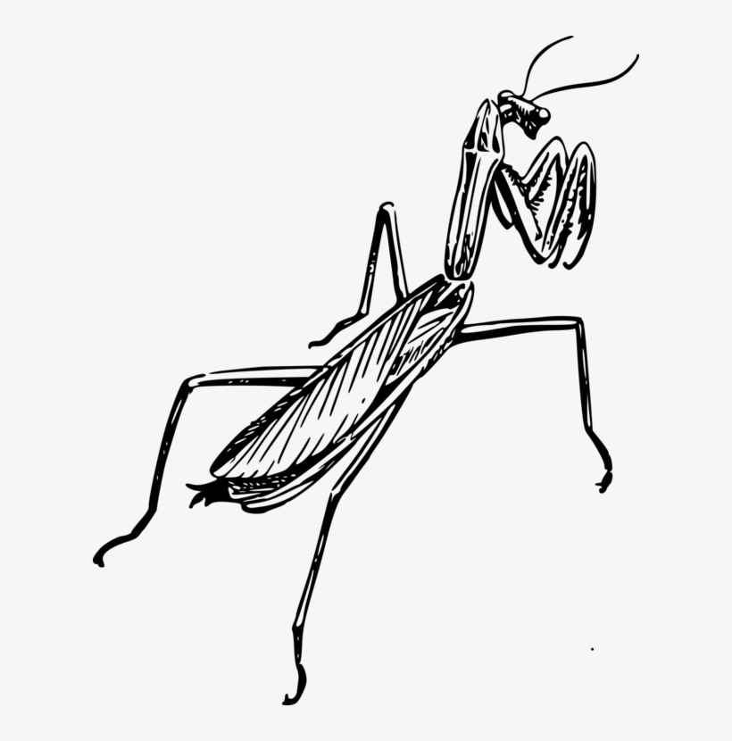 820x830 Insect European Mantis Drawing Line Art