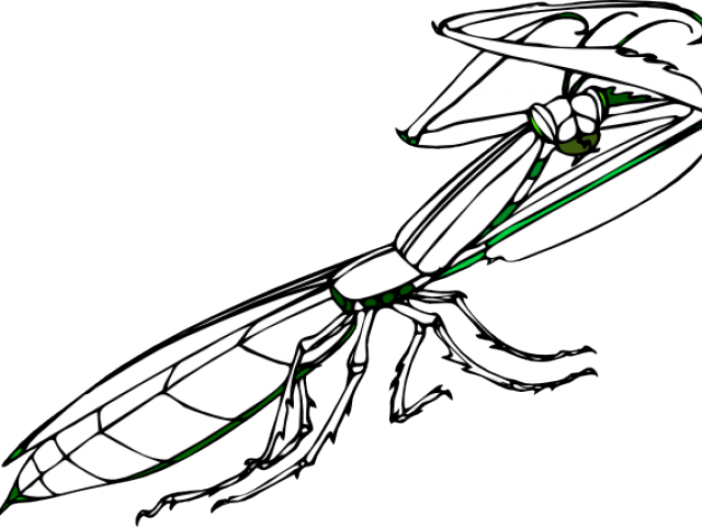 640x480 Praying Mantis Clipart