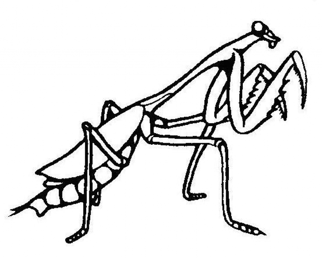 1024x822 Praying Mantis Clipart Pray Mantis
