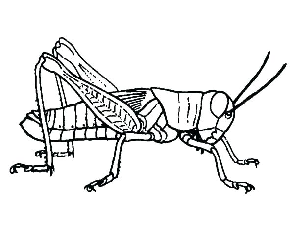600x477 Praying Mantis Coloring