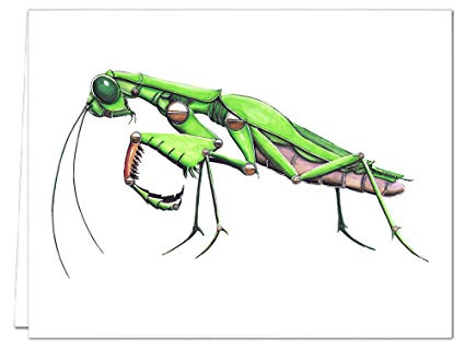 425x319 Mechanical Praying Mantis Note Card