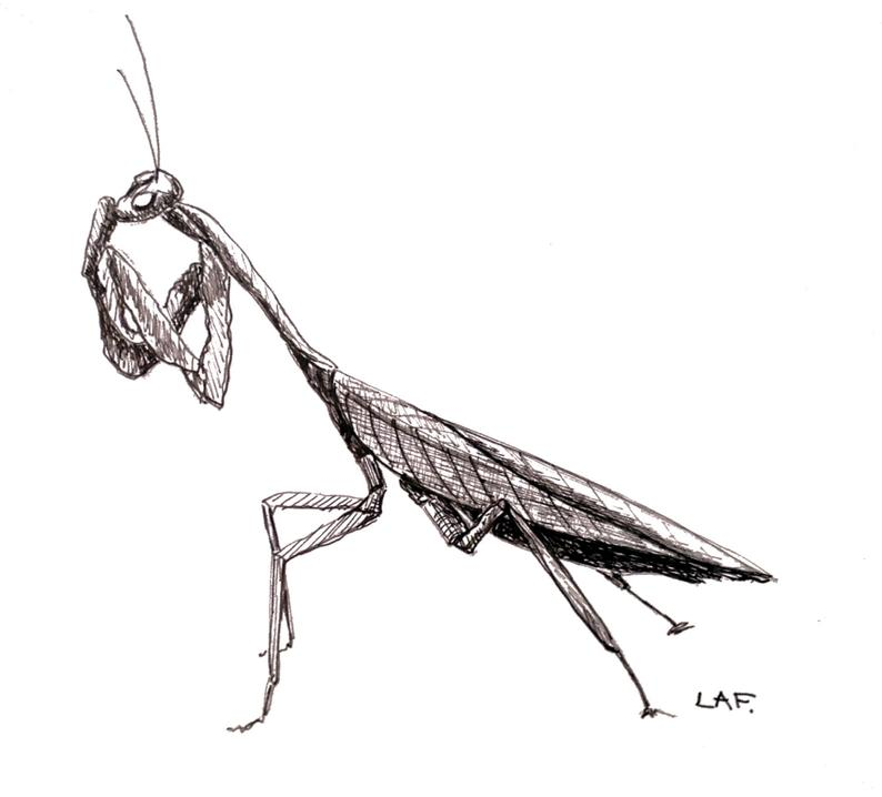 794x718 Praying Mantis Drawingoriginal Drawing Praying Mantisblack Etsy