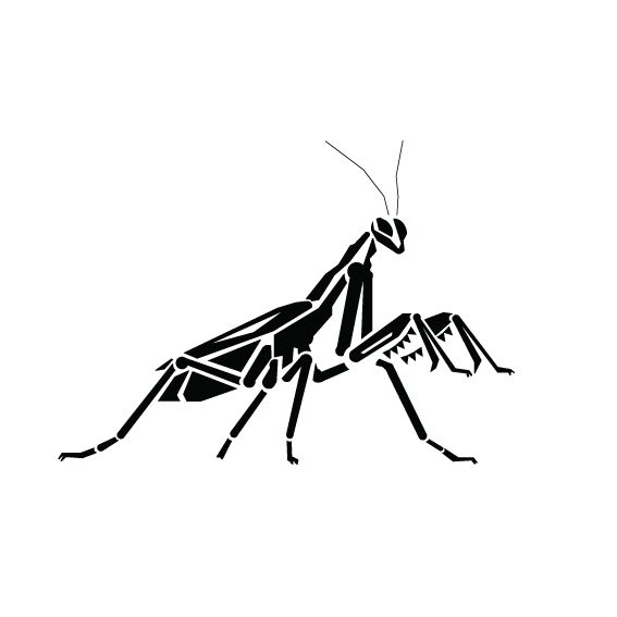 567x567 Pray Mantis Line Drawing