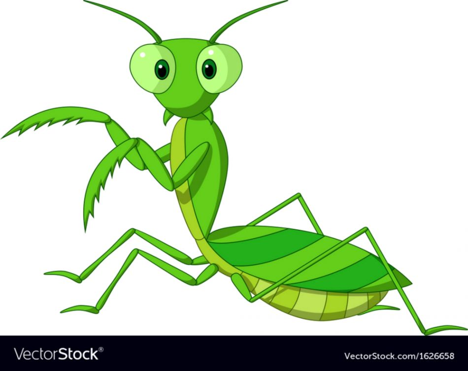 950x754 Cute Praying Mantis Drawing Thestardollbang