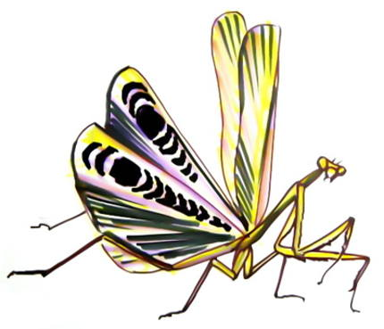 430x369 How To Draw A Praying Mantis