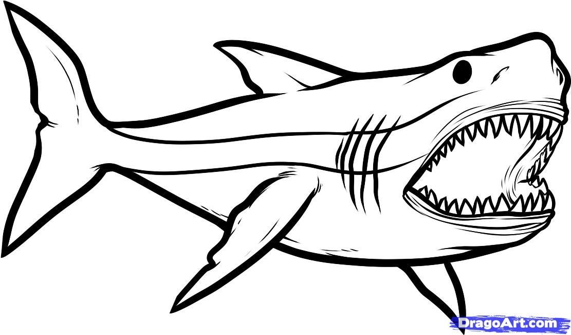1111x651 Megalodon Drawing Prehistoric Shark For Free Download