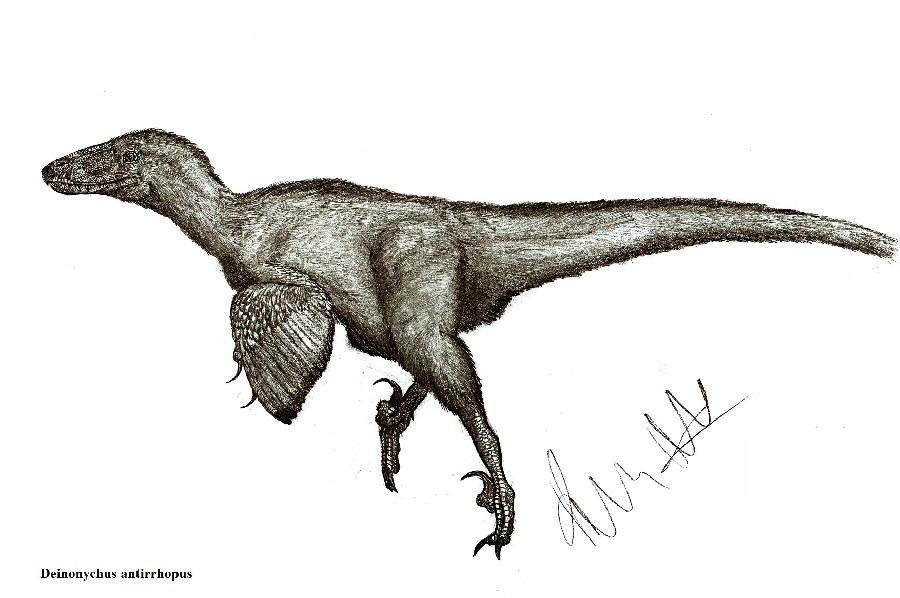 900x598 Deinonychus Pictures Facts