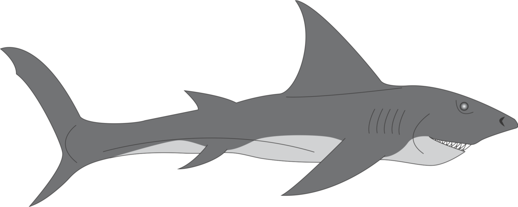 1024x410 Megalodon Drawing Prehistoric Shark For Free Download
