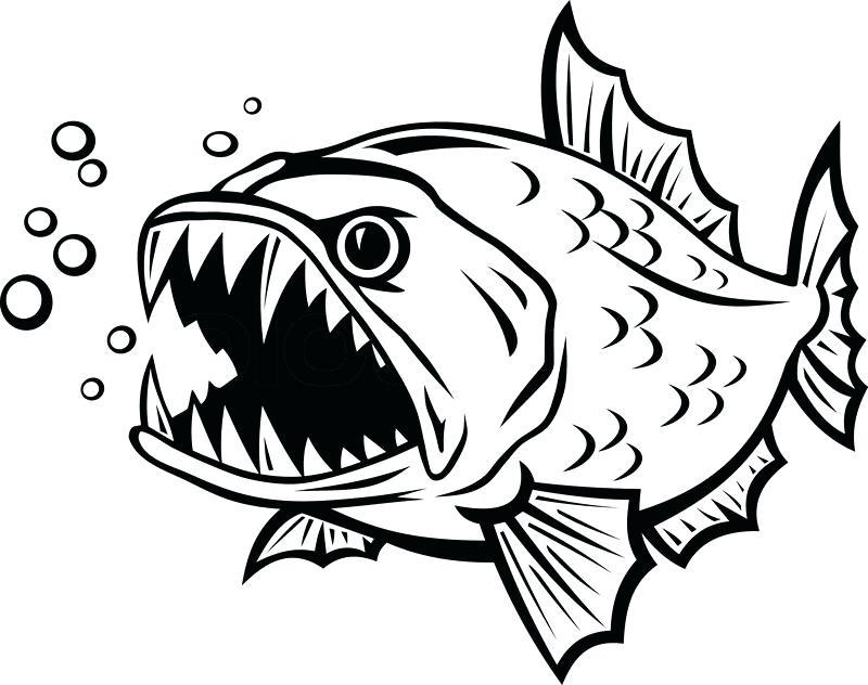 800x632 Piranha Drawings How To Draw Piranha