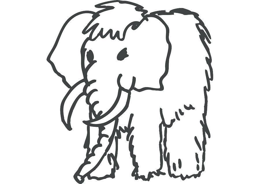 900x640 Mammoth Drawing