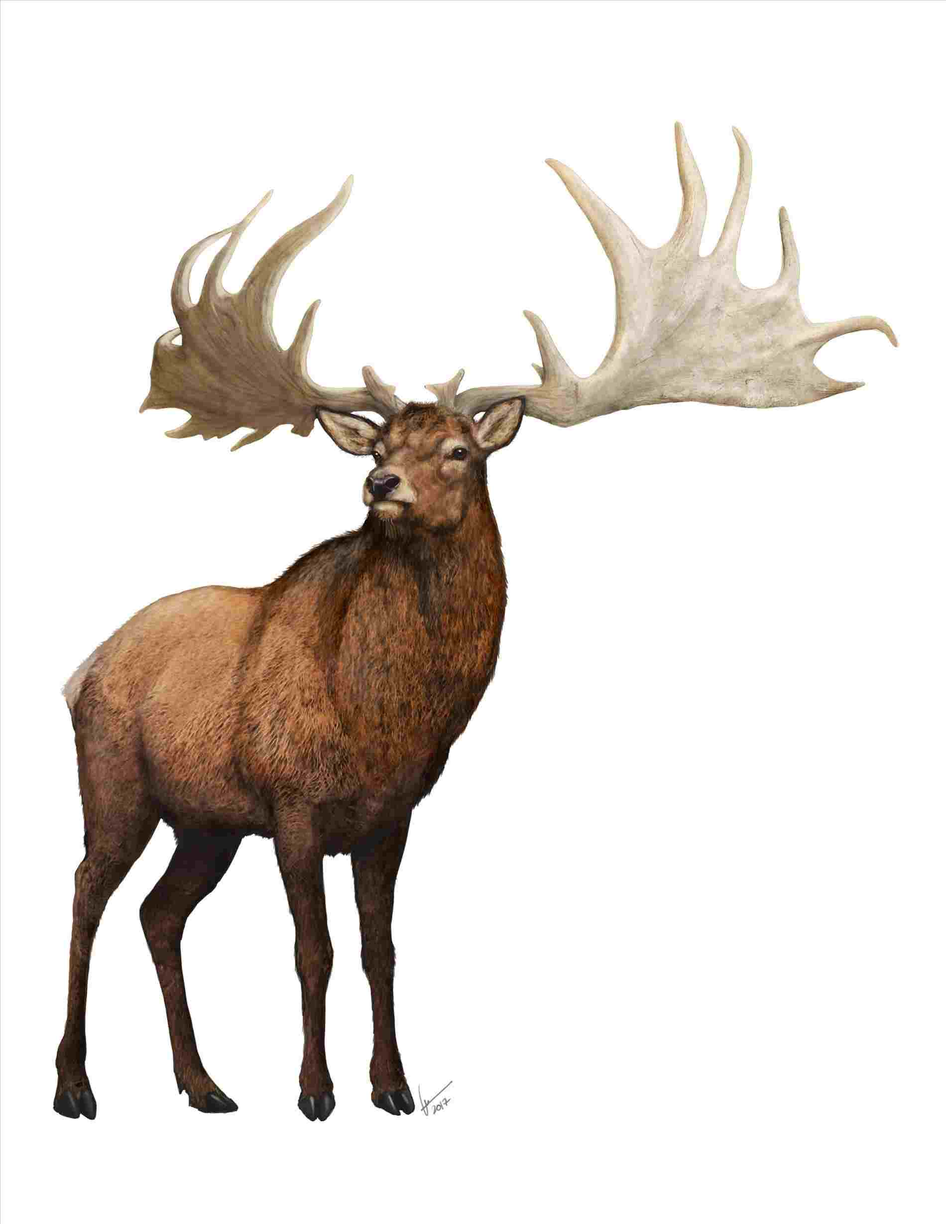 1900x2458 S And Art Rhcomau Megaloceros Prehistoric Animal Drawings