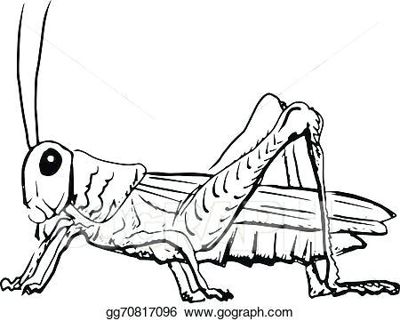 450x361 grasshopper drawings grasshopper cartoon grasshopper drawings