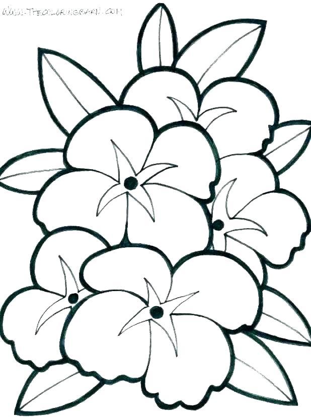 618x828 pretty drawings of flowers pretty flowers to draw step