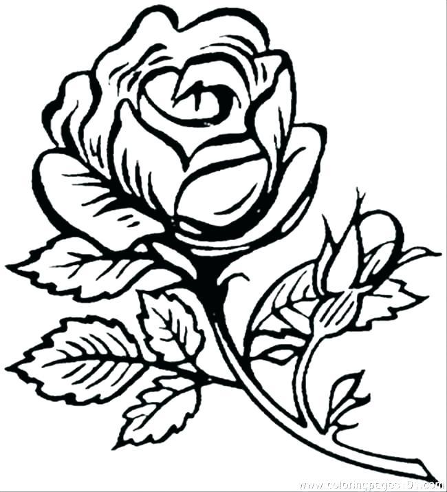 650x715 pretty flowers drawings draw pretty flowers pretty flowers