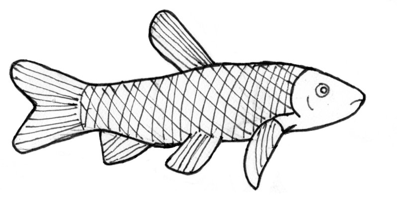 Pretty Fish Drawing