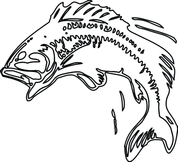 600x546 bass fish coloring pages bass coloring pages pretty inspiration