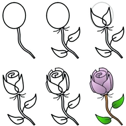 491x491 drawings of easy roses how to draw roses drawings easy roses