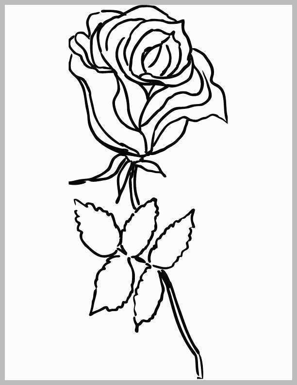 612x792 rose flower coloring pages pretty pretty rose color