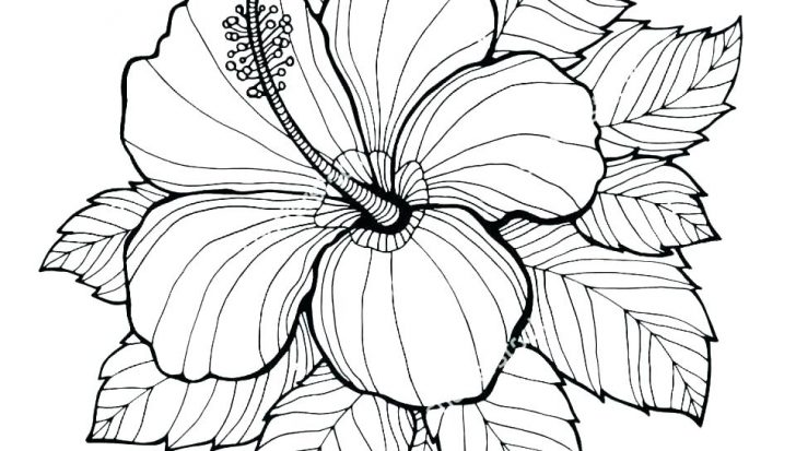 728x413 Coloring Pages For Kids Online Printable Animals Cartoon Flower