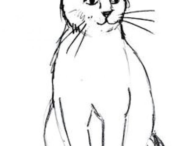 640x480 Drawing A Cat Profile Best Drawing Cats Images In Draw