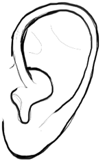 150x234 How To Draw Human Ears In Profile Step