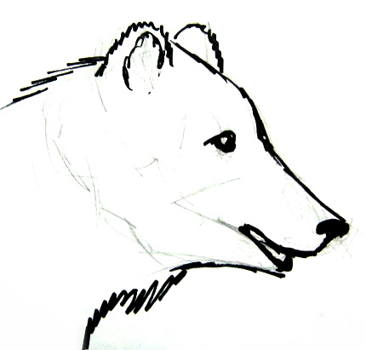 366x350 How To Draw A Head And Face Of A Bear