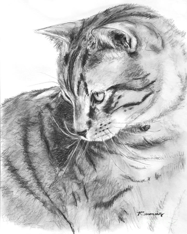 720x900 Huge Collection Of 'cat Profile Drawing' Download More Than