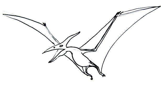614x329 how to draw a pterodactyl
