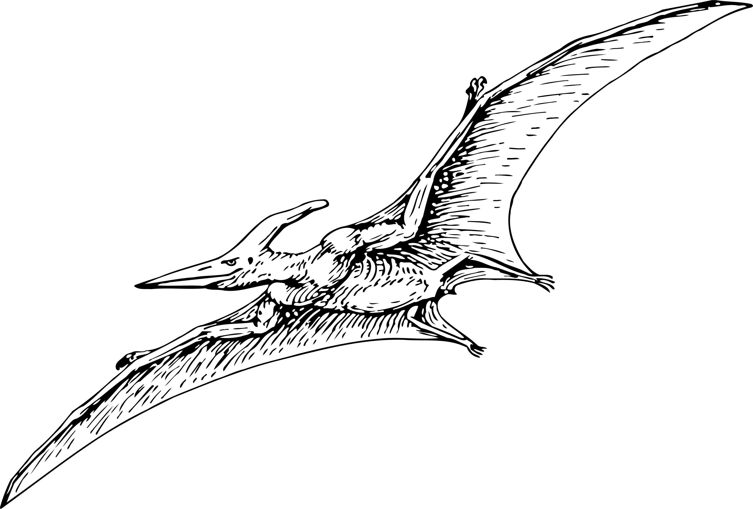 2400x1623 pterodactyl drawing pteranodon for free download