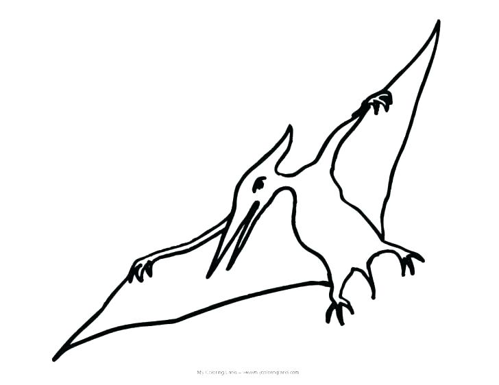 728x562 coloring pages vs t pterodactyl color