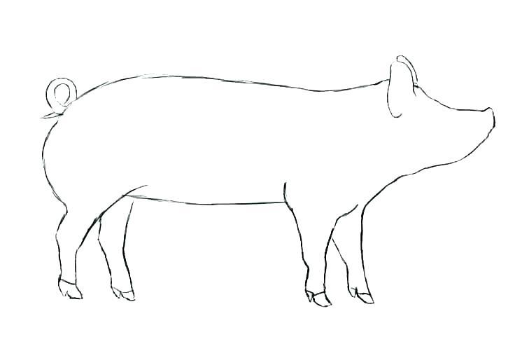 736x491 pig stencil template pig stencil template peppa pig pumpkin