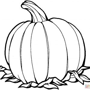 300x300 Pumpkin Outline Fresh Collection Of Pumpkin Drawing Outline