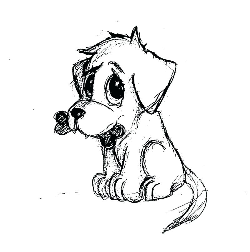 800x808 Drawings Of Puppys Drawing Of A Puppy How To Draw Puppies