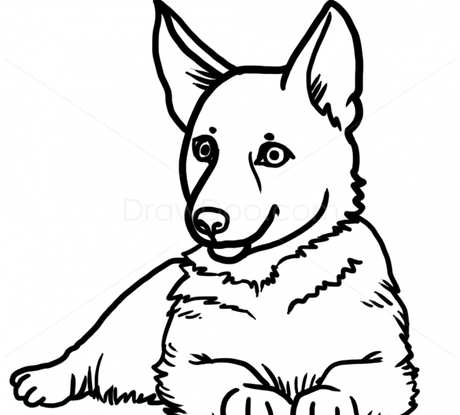 Puppy Line Drawing